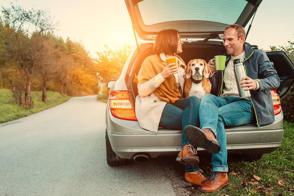 Preparando un viaje con tu mascota